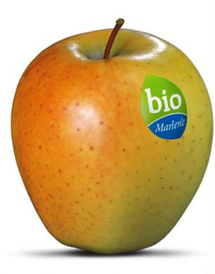 Bio%20marlene%20spagna_0.jpg