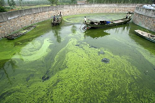 alghe%20venezia_0.jpg
