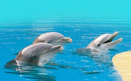 delfini%20gardaland_1.jpg