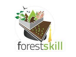 forest%20skill_0.jpg