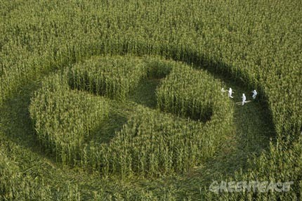 greenpeace%20campo.jpg