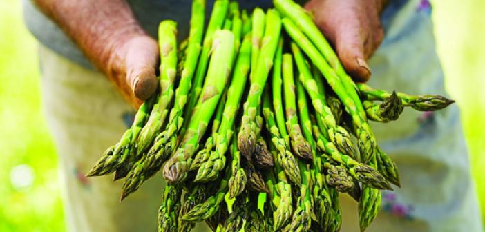 Asparagi-Bio-Brio-Alce-Nero