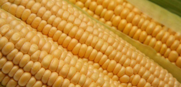OGM_1.jpg
