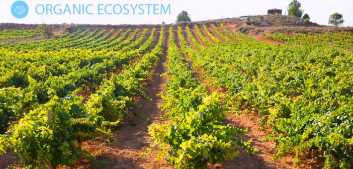 Progetto Organic Ecosystem