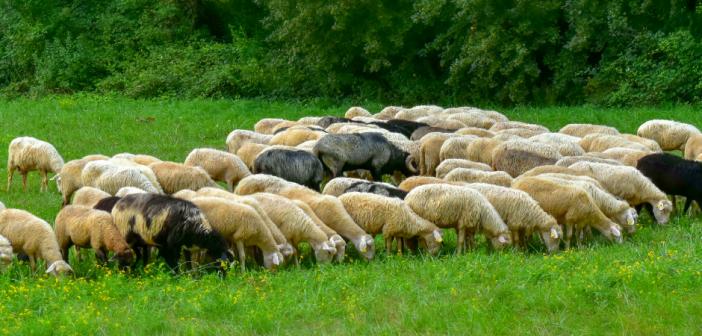Legge biodistretti Lazio