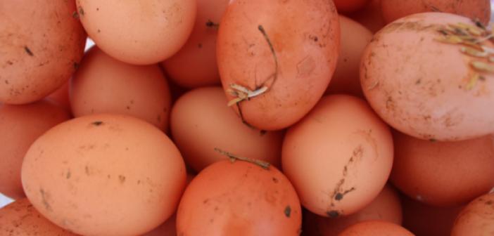 Francia uova bio