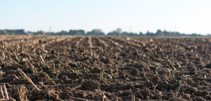 agriculture-cropland-farm-1000057