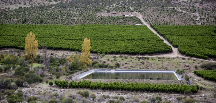 DanWatch. Første dag i Chile på avocado og vandmangel-historie.