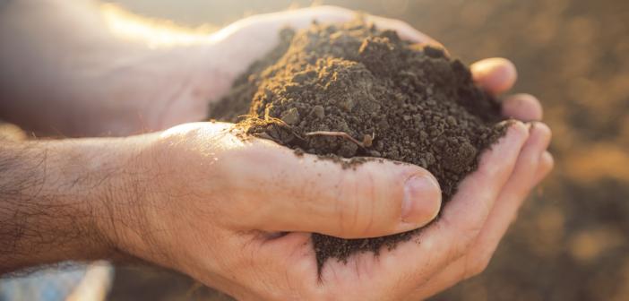 fertilità del suolo