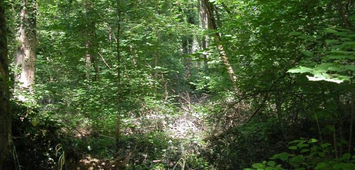 foresta5.jpg