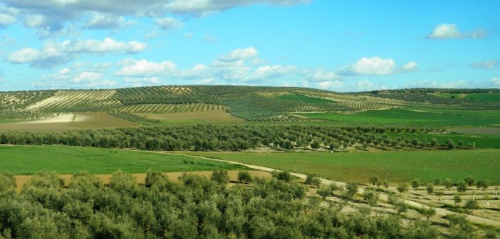 olio-andalusia-oliva-cosa-mangiare