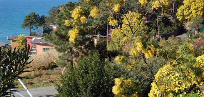 panorama_mimosa.JPG_.jpg