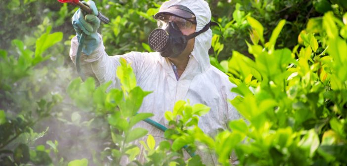 pestici mele